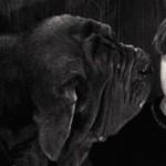 Como se llama el perro de Hagrid