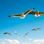 Como se llaman los animales que vuelan