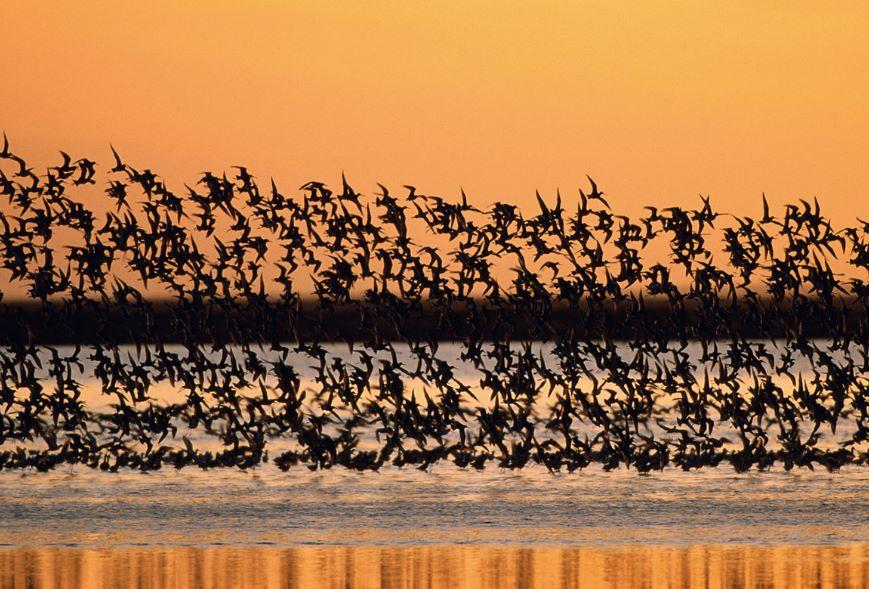 Como se llama un conjunto de aves