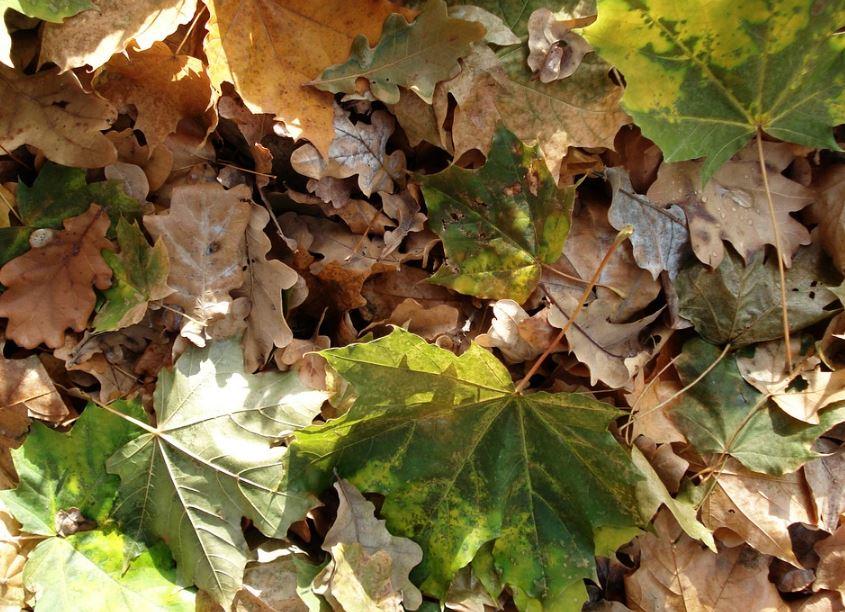 Como se llama el conjunto de hojas