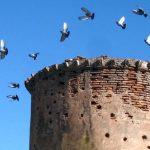 Como se llama casa de las palomas