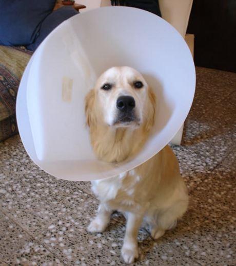 Como se llama el collar de los perros