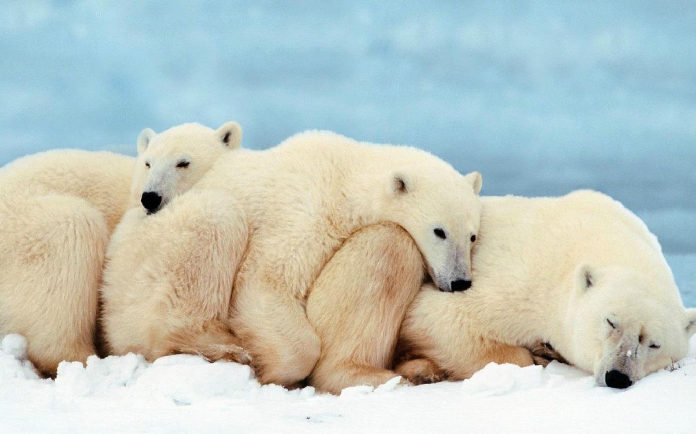 Donde viven los osos polares