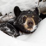 Como se llama casa de los osos