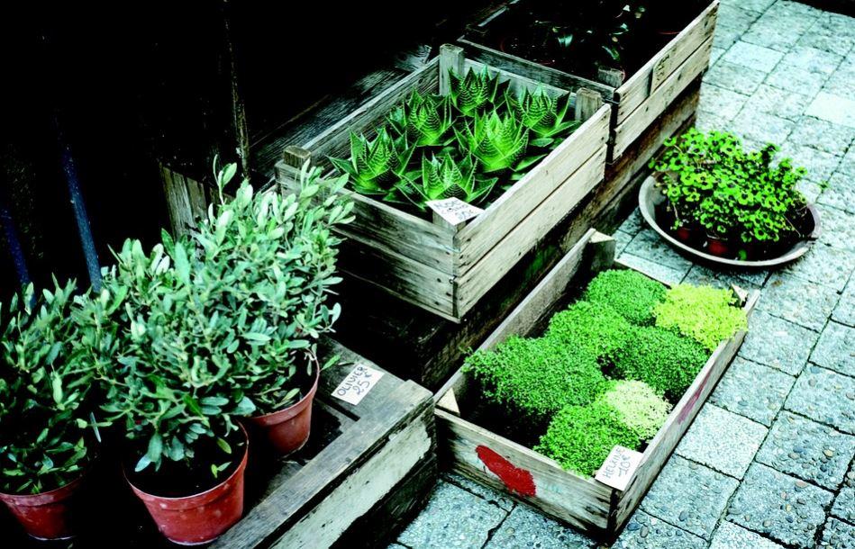 Planta for Plan de negocios de un vivero de plantas